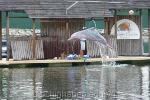 Dolphin -Lagoon