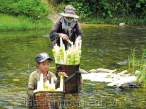 Mang-chua-rung-tay-nguyen