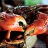Về Cà Mau ăn đặc sản chính hiệu