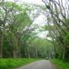 Kinh nghiệm du lịch rừng Cúc Phương.