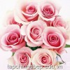 Nghệ thuật tặng hoa ngày mùng 8 tháng 3