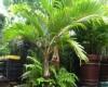 Những loại cây xanh tốt cho phong thủy nhà ở
