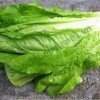 Những lợi ích tuyệt vời cho sức khỏe từ rau diếp.
