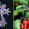 Những loài cây cực độc hại không nên trồng trong nhà