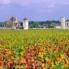Những vùng rượu nho rộng lớn và nổi tiếng ở Pháp