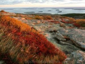 Vuon-quoc-gia-Acadia