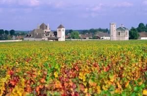 ruou-nho-Burgundy