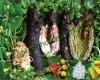 Đặc sản cá nục nướng lá mướp – Bình Thuận